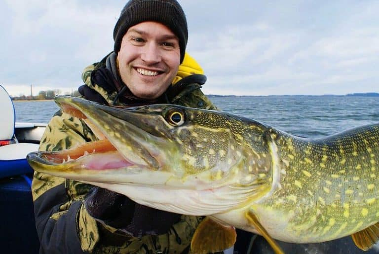 fiskeguiden_gedde