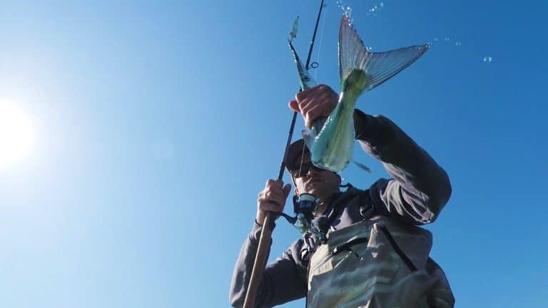 Fiskeguiden hornfisk