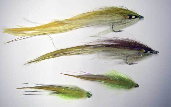 flat-wings_seatrout