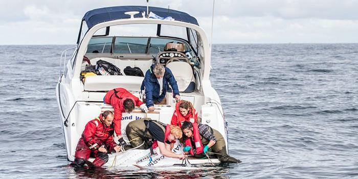 tuna-tagging_dtu