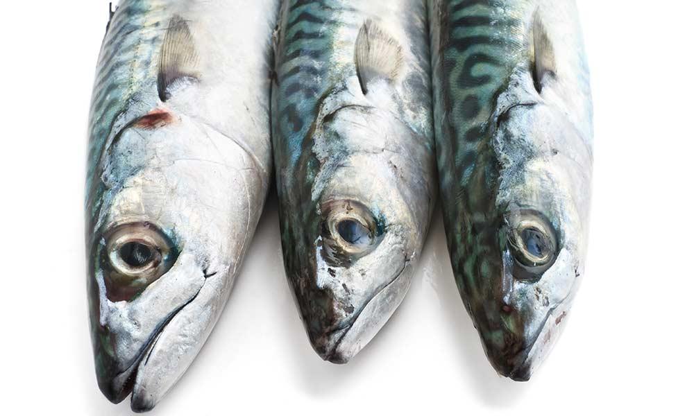 makrel-boykot