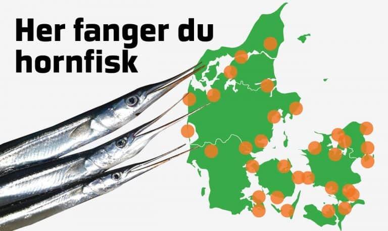 hvor fanger man hornfisk